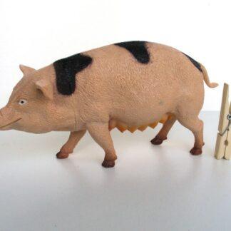 Groot varken
